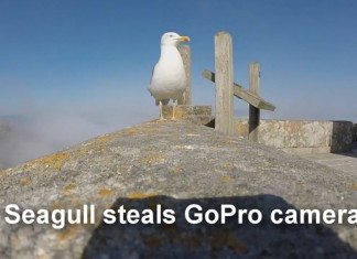 Seagull steals GoPro camera