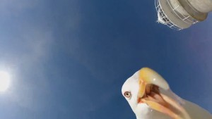 Seagull steals GoPro from tourist and a shot of its cheeky face. MINE!