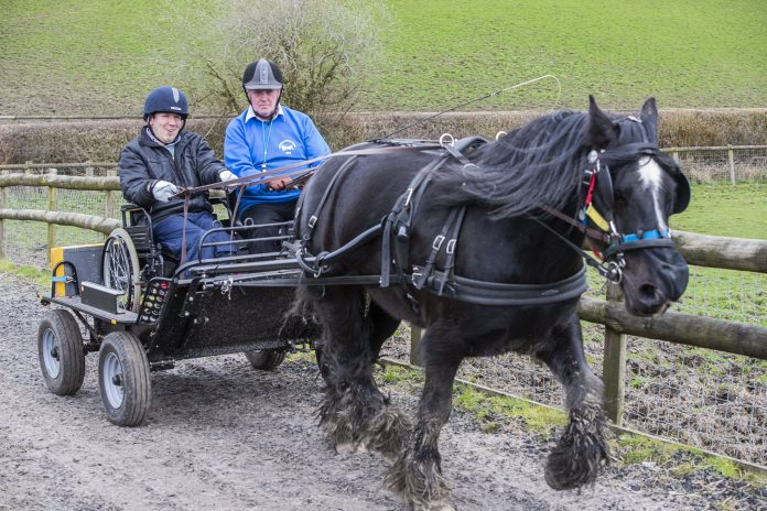 Matt Palamarczuk, boccia coach at Pendine Park has taken up carriage driving at Clwyd Special Riding Centre, Llanfynydd, after the horse he has been riding for years retired. Matt is pictured with carriage horse Jack and volunteer John Chaloner