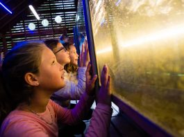 Plenty to keep the children entertained at CAT this winter.